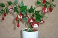 Тендітні квітки фуксії з бісеру