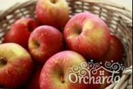 Яблука користь і шкода
