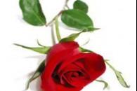 Ефірна олія троянди для шкіри
