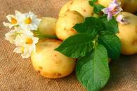 Картопляна дієта