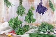 Пряні трави в кулінарії і медицині
