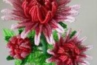Способи бісеропленія хризантеми