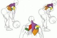 Вправи для м'язів спини